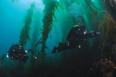 Swimming in the Forest: A Kelp Diving How-To #ScubaDivingInfographicsandQuotes