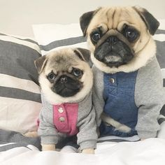 pop da corn Buffy and I are having a pajama pawty for #twinningtuesday #Pug #PugWorld