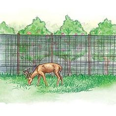 Netting to keep out deer
