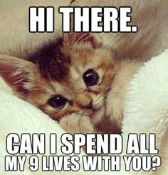 Hi There. Can I spend all my 9 lives with you... Kitten!