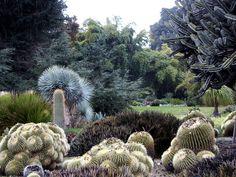 Barrel Cactus Huntington Library Desert Garden