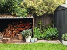 How To Make Your Garden Lush with Plants - for Free - House Nerd Lush Garden, Garden Plants, Rubber Tree, New Roots, Big Leaves, Agapanthus, Elephant Ears, Free Plants, Agaves