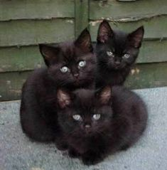 Love Black Kitties!