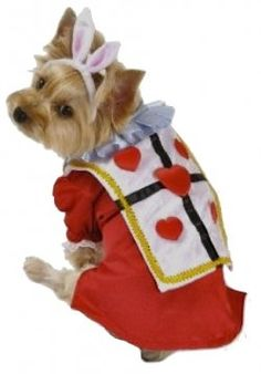 Unique Dog Halloween Costumes