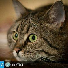 #Repost @bori7la8 ・・・ Дашка #dashamel #foto #кошка #cat #пур