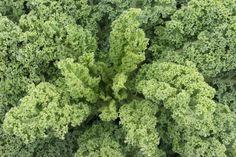 52 ways to eat kale. I <3 Kale.