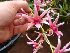 orquídeas | ORQUIDARIO ALLES BLAU