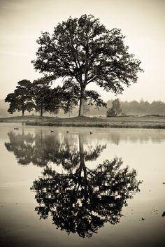 Stimmungsvolle Baumspiegelung im Wasser