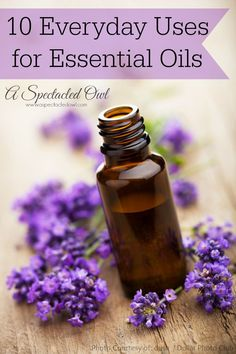 10 Everyday Uses for Essential Oils - A Spectacled Owl