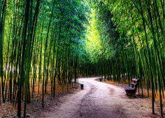 Taehwa Forest, Ulsan, South Korea