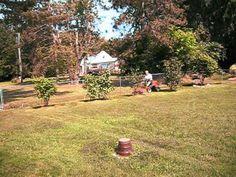 My latest addition, Husqvarna 970 Garden Gadgets, Plants, Plant, Planets