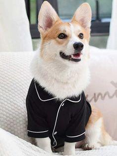 1 pieza top de pijama de perro | Moda de Mujer | SHEIN México Dalmatian Mix, Up Dog, Dog Pajamas, Animal Fashion, Pajama Top, Black Pattern, Yorkie, Small Dogs, Pugs