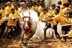 A year after the Jallikattu is set to return as an Indian Premiere League-Styled League ahead of Pongal. The Competition is Planned in a plot opposite the Madras Crocodile Bank on East Coast Road in January 7. #IndianPremiereLeague #Jallikattu #Pongal #MadrasCrocodileBank #TamilnaduJallikattuPeravai #ChennaiJallikattuAmaipu #TaminaduNews #ChennaiUngalKaiyil