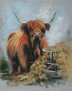 Highland Cow Art limited edition prints by Hilary Barker at Mid Torrie Farm Callander in Scotland. Highland Cow Painting, Highland Cow Art, Scottish Highland Cow, Highland Cattle, Animal Drawings, Art Drawings, Show Cows, Show Cattle, Rustic Art