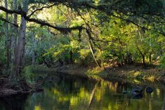 Hillsborough River State Park covers nearly acres of wild Florida landscape and features over seven miles of scenic trails. Hiking In Florida, Places In Florida, Florida Travel, Tampa Bay Florida, Florida Adventures, Best Hikes, Places Of Interest, Another World, Hiking Trails