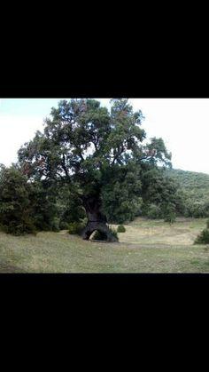 Árbol Tres Patas- Mendaza
