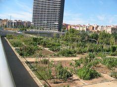 Barcelona+-+11-9-2010+021.jpg (1024×768)
