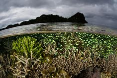 Underwater Photographer Ethan Daniels's Gallery: Underwater Seascapes: Mangrove Forest - DivePhotoGuide.com