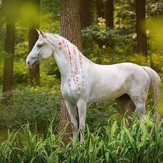 White beauty, Orlov trotter mare