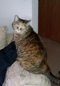 Callie-Not a Black Cat! - The Animal Rescue Site