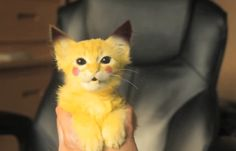 And you caught a wild Pikachu! Give a nickname to your new Pikachu? Pikachu Pikachu, Cutest Animals On Earth, Animals And Pets, Baby Animals, Cute Animals, I Love Cats, Cute Cats, Cosplay, Catio