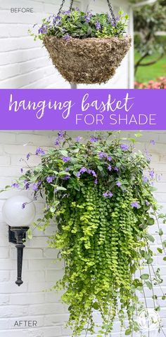 Hanging Plants Outdoor, Plants For Hanging Baskets, Hanging Flowers, Outdoor Shade, Diy Hanging, Hanging Basket Garden, Best Shade Flowers, Hanging Gardens, Basket Planters