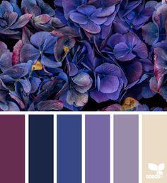 { flora hues } image via: @traceylbolton #color #palette #colorpalette #pallet #colour #colourpalette #design #seeds #designseeds