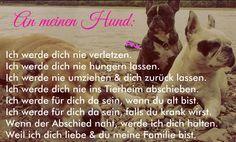 An meinen #Hund: Ich werde dich nie verletzen. Ich werde dich nie hungern lassen. ♡ Ich werde nie umziehen & dich zurück lassen. Ich werde dich nie ins Tierheim abschieben. ♡ Ich werde für dich da sein, wenn du alt bist. Ich werde für dich da sein, falls du krank wirst. ♡ Wenn der Abschied naht, werde ich dich halten. Weil ich dich liebe & du meine Familie bist. ♡