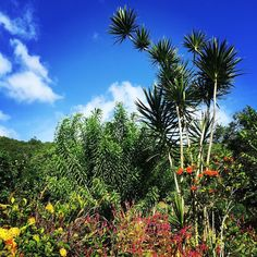 """Repost from Instagram ! #WeLike ! #Madinina by @alloverthemap """"The medicinal garden at the Savane des Esclaves in Martinique. Check out my article (link in profile) about things to do on Martinique."""" http://ift.tt/1oxbETu"""