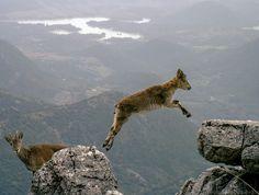 Salto de Fe - Jump of faith - Desafiando el Vacio - Challenging the Void