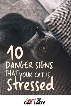 Here are 10 danger signs that your cat is stressed out that you can look for to . - Cat Care Tips - Raising Kittens, Cats And Kittens, Cat Care Tips, Pet Care, Pet Tips, Danger Signs, Cat Hacks, Cat Signs, Outdoor Cats