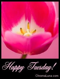 Happy Tuesday! I hope you have a wonderful day!! Today is a gift. Live your life to the fullest! #newday