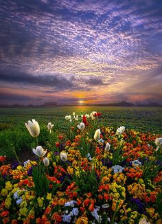 The Sun Just Touched the Morning ~ Phil~Koch