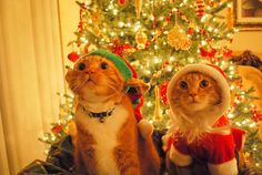<b>Christmas is a time of cats.</b> OK, that