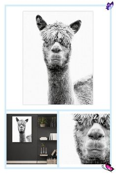 """Masterpiece Art Gallery Jalisa 30"""" X 40"""" Canvas Wall Art Black/white Masterpiece Art Gallery Jalisa 30"""" X 40"""" Canvas Wall Art Black/white - A darling alpaca gazes at the viewer from center frame in this extraordinary black and white photo print. If you're an alpaca lover, display this piece in your bathroom, hallway, or living room to show off your unique character and style. - living room decor<br>"""