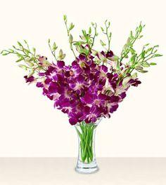 flower cluster arrangements | Dendrobium and Orchids