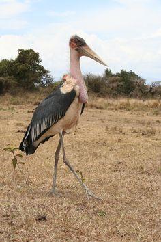 Mariboe Tanzania