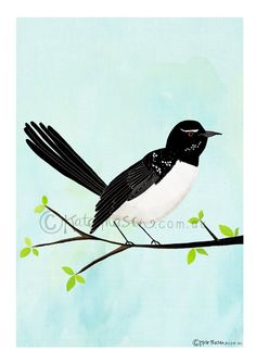 Willie Wagtail on Branch ART PRINT Australian by MessyMissKate