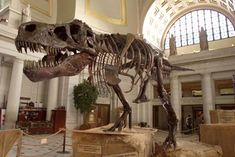The 67-million-year-old Tyrannosaurus rex skeleton known as Sue stands on display at Union Station on June 7, 2000, in Washington, D.C.