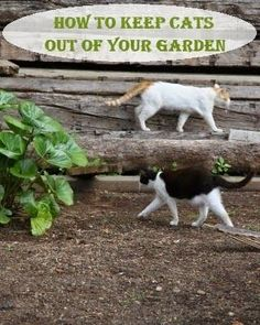 How to Keep Cats Out of Your Garden | Dreaming Gardens