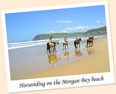 Morgan Bay, South Africa - one day I will go back to the magical Mkulu Kei. One Day I Will, Oh The Places You'll Go, South Africa, Trail, Charlotte, To Go, African, Horses, Adventure