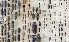 insects, arachnids and crustaceans at the Macleay Museum (the University of Sydney), via Time Out Sydney