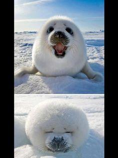 Seals- braxtons favorite