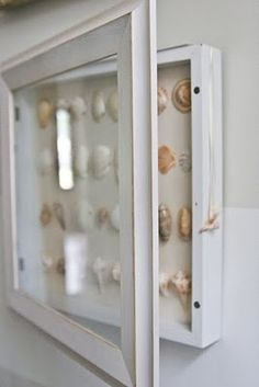 shells displayed - hang box so glass door can be opened to more closely view shells
