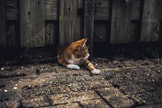Peekaboo   Flickr - Photo Sharing!