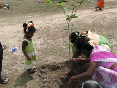 More than 800,000 volunteers from Uttar Pradesh joined forces last week to plant 50 million trees in just 24 hours.