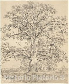 Oak Tree Drawings, Tree Sketches, Easy Drawings, Pencil Drawings, Drawing Trees, Drawing Art, Life Drawing, National Gallery Of Art, Pine Tree Tattoo