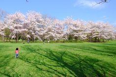 前田森林公園 (Maeda forest park)