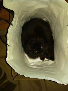 Crazy Abby Lee in a bag in a box Dec.2015
