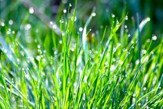 Healing Weeds: Grass